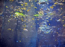 Fishes in natural background Stock Image