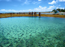Fishes in a natural sea pool Stock Photos