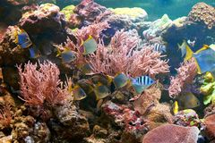 Fishes and other fauna of coral reef. In aquarium Stock Photo
