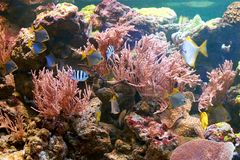 Fishes and other fauna of coral reef. In aquarium Royalty Free Stock Image