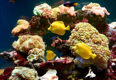 Fishes and other fauna of coral reef Stock Images