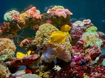 Fishes and other fauna of coral reef Royalty Free Stock Photography