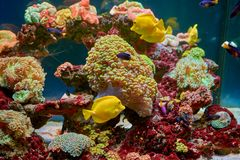 Fishes and other fauna of coral reef Royalty Free Stock Photo