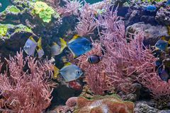 Fishes and other fauna of coral reef. In aquarium Royalty Free Stock Photos
