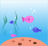 Fishes Stock Image