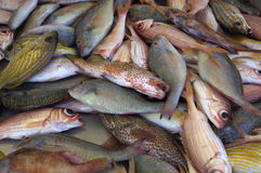 Fishes in the Sainte Anne market in Martinique Royalty Free Stock Images