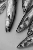 Fishes for sale. Fresh fishes for sale at a market Stock Photography