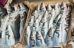 Fishes for sale in the fish market in Bodrum Stock Image