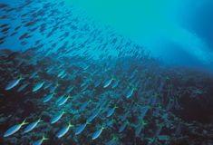 Fishes of Sea. Details royalty free stock image