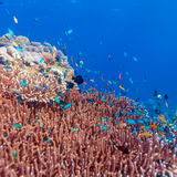 Fishes and Sea Bottom of Ecosystem. Of Tropical Coral Reef Stock Photography