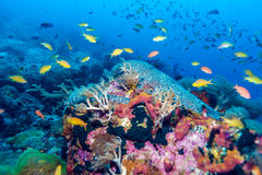 Fishes and Sea Bottom of Ecosystem. Of Tropical Coral Reef royalty free stock images