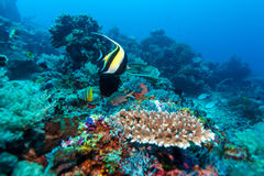 Fishes and Sea Bottom of Ecosystem. Of Tropical Coral Reef, Balinese diving, Indonesia Stock Images