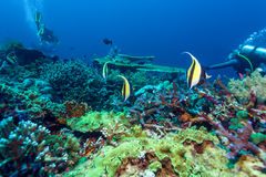 Fishes and Sea Bottom of Ecosystem. Of Tropical Coral Reef, Balinese diving, Indonesia Stock Photos