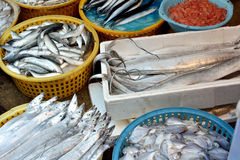 Fishes and seafood selling. Kinds of fish and seafood selling in market, shown as different, various and market business dealing Stock Photos