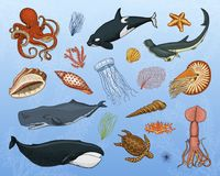 Fishes set or sea creature Blue Whales., jellyfish and starfish. octopus and squid, calamari, hammerhead shark. green stock illustration