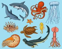 Fishes set or sea creature nautilus pompilius, jellyfish and starfish. octopus and squid, calamari. dolphin and. Hammerhead shark. green turtle and seahorse Stock Image