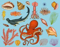 Fishes set or sea creature nautilus pompilius, jellyfish and starfish. octopus and squid, calamari. dolphin and. Hammerhead shark. green turtle and seahorse Stock Photography