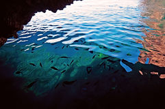 The fishes shoal in clear water of a grotto in Palaiokastritsa, Сorfu, Greece Royalty Free Stock Photo