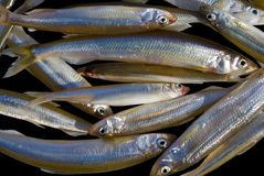 Fishes (smelt) 6 Royalty Free Stock Photography