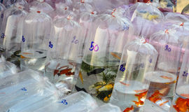 Fishes sold in plastic bags : sunday market Royalty Free Stock Image
