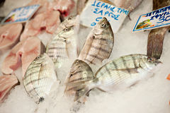 Fishes stand Stock Images