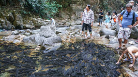 Fishes in the stream and tourism. People come to see a lot of fishes in the natural stream in Thailand Stock Images