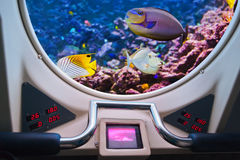 Fishes in submarine window Royalty Free Stock Image