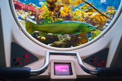 Fishes in submarine window Stock Photography