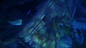Fishes swimming around sunk ship. Shots of fishes swimming in aquarium stock footage