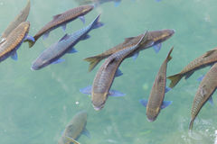 Fishes swimming in water. Fishes swimming in the water royalty free stock images