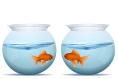 Fishes in tanks Stock Photography