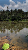 Fishes in the tropical pond with the palsm and sky. In the background Stock Photography