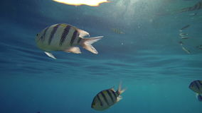 Fishes under the blue sea level stock footage