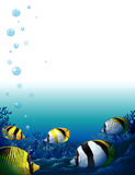 Fishes under the sea Royalty Free Stock Photography