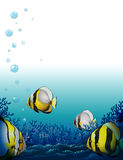 Fishes under the sea Royalty Free Stock Photo