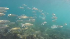 Fishes under water stock video