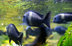 Fishes under water in the sunlight Stock Photos