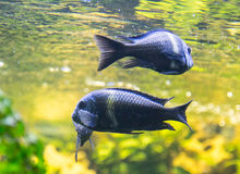 Fishes under water in sunshine Stock Photos