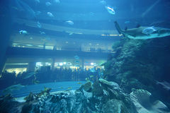 Fishes in underwater aquarium tunnel. Balconys with people at back side royalty free stock image