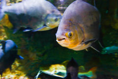 Fishes - Underwater life Royalty Free Stock Photos