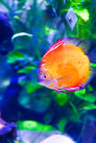 Fishes - Underwater life Royalty Free Stock Images