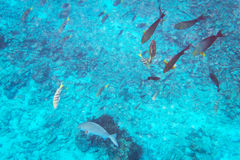 Fishes underwater in Thailand Royalty Free Stock Photography