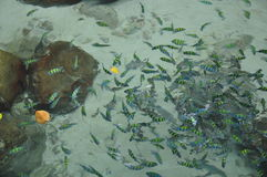 Fishes in water Royalty Free Stock Photos