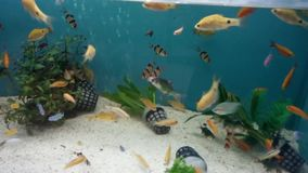 Fishes in water stock video footage