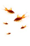 Fishes on a white background Royalty Free Stock Photos