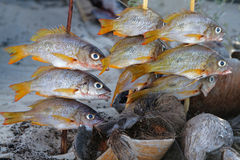 Fishes in the wood fire Stock Image