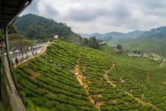 Fisheya view of Tea Plantations Cameron Highlands Royalty Free Stock Image