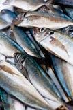 Fisheye Foto de Stock