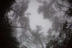 Fisheye-Ansicht der Spitzen der Bäume im Nebel stockfotos