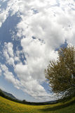Fisheye Ansicht des bewölkten Himmels Stockbild